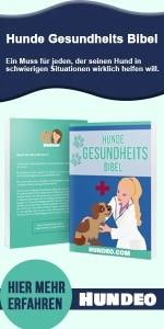 Hunde Gesundheits Bibel lesen